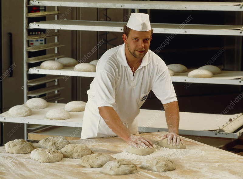 Baker kneading dough for making loaves of bread - Stock Image T930/0198 - Science Photo Library