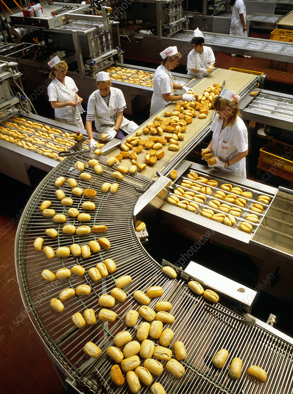 Loaves of bread on a packaging production line