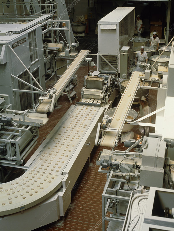 Loaves of dough on a bread production line