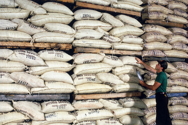 Worker checks sacks of coffee beans in warehouse