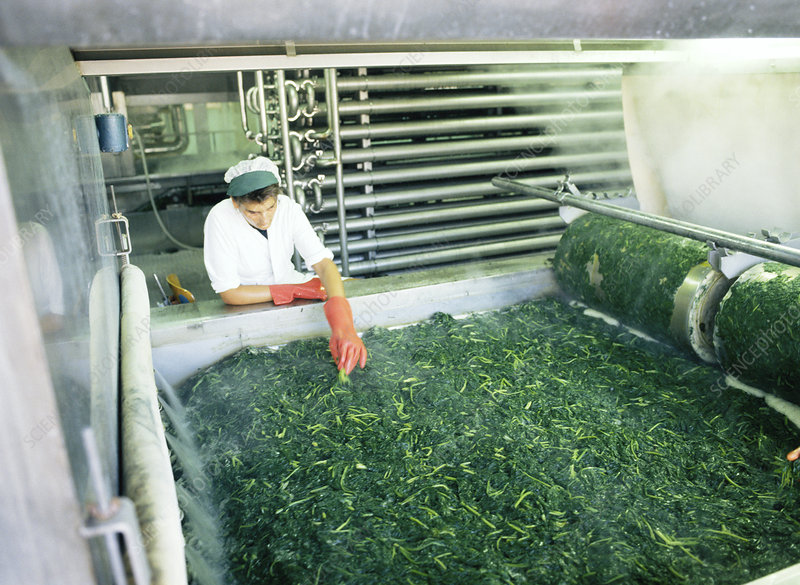Processing spinach