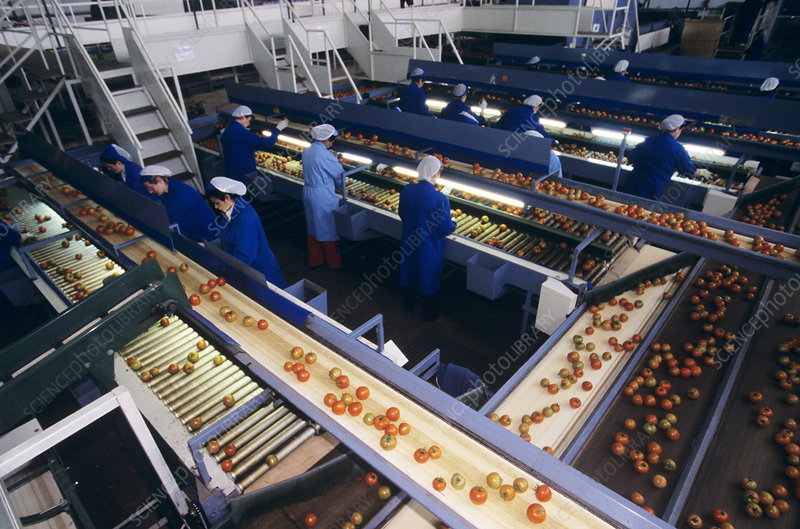 Fruit packing factory