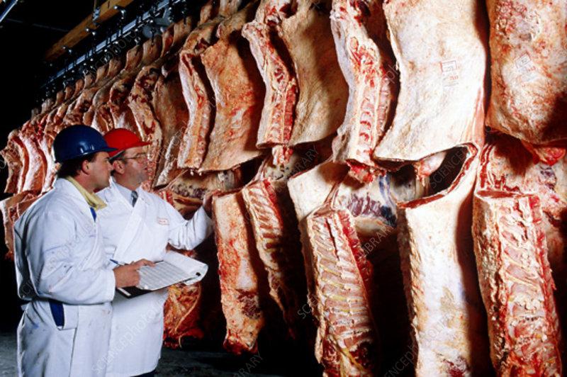 Meat inspectors examine beef
