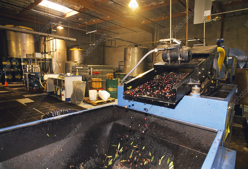 Olive processing factory