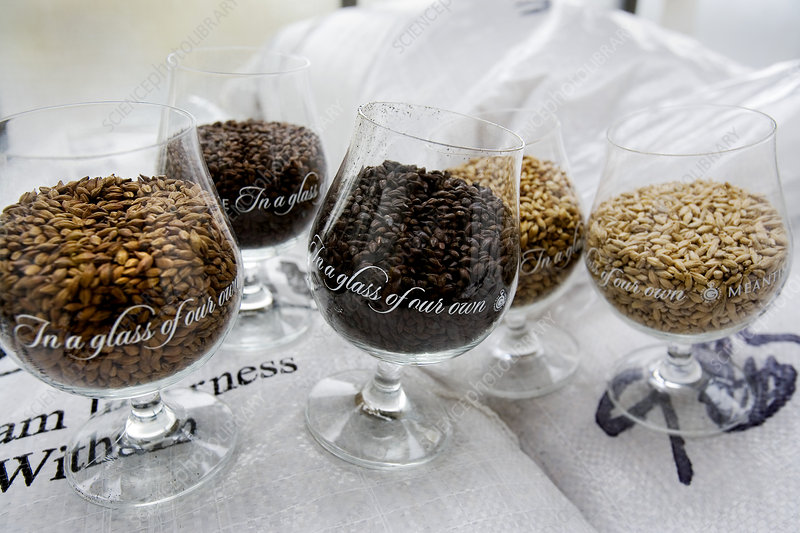 Roasted barley for brewing beer