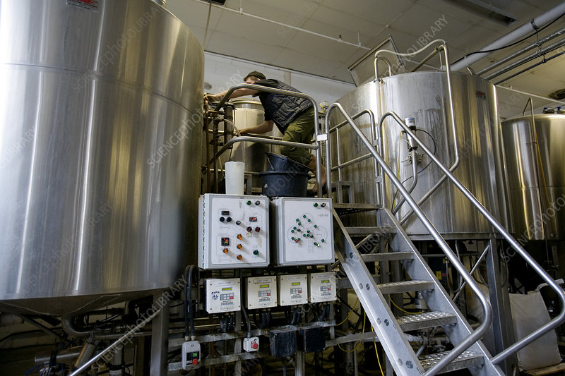 Technician adjusting vats in microbrewery