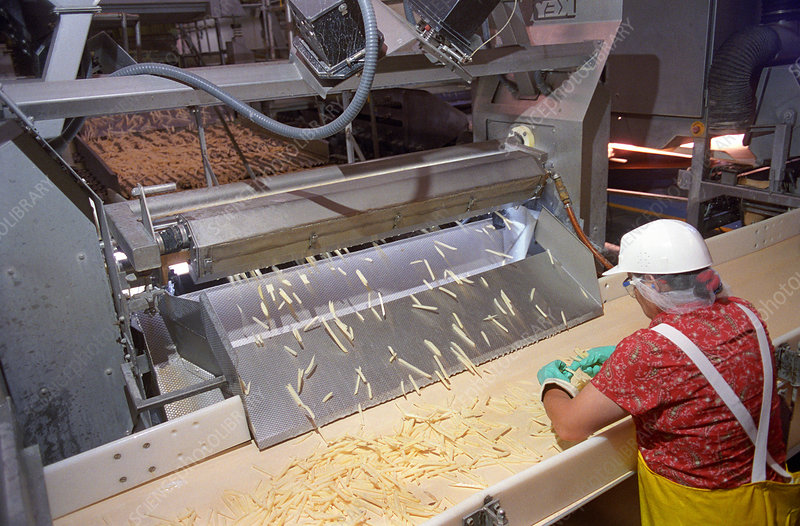 French Fry Sorting