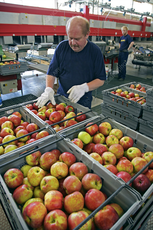 Fruit distribution