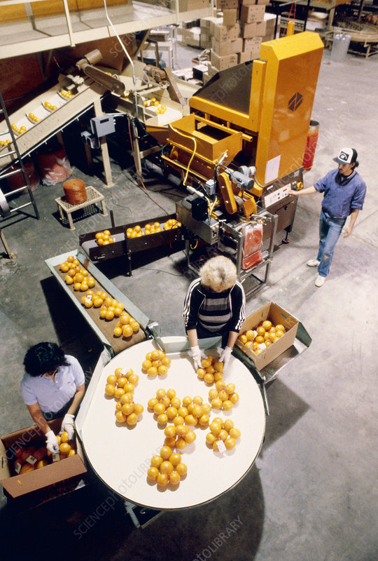 Orange packing plant