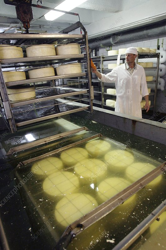 Cheese production, drying room