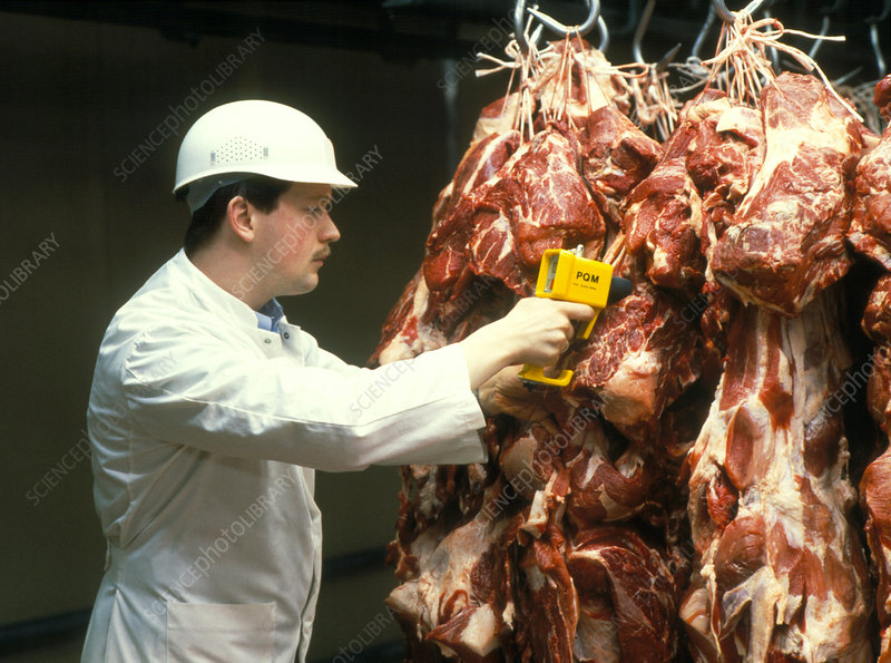 Quality control of pig carcasses in an abattoir