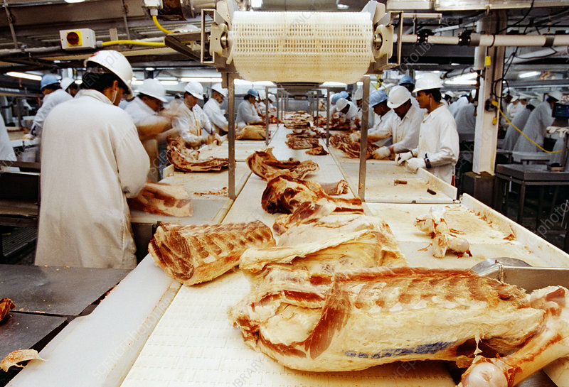 Workers preparing beef in a packing plant