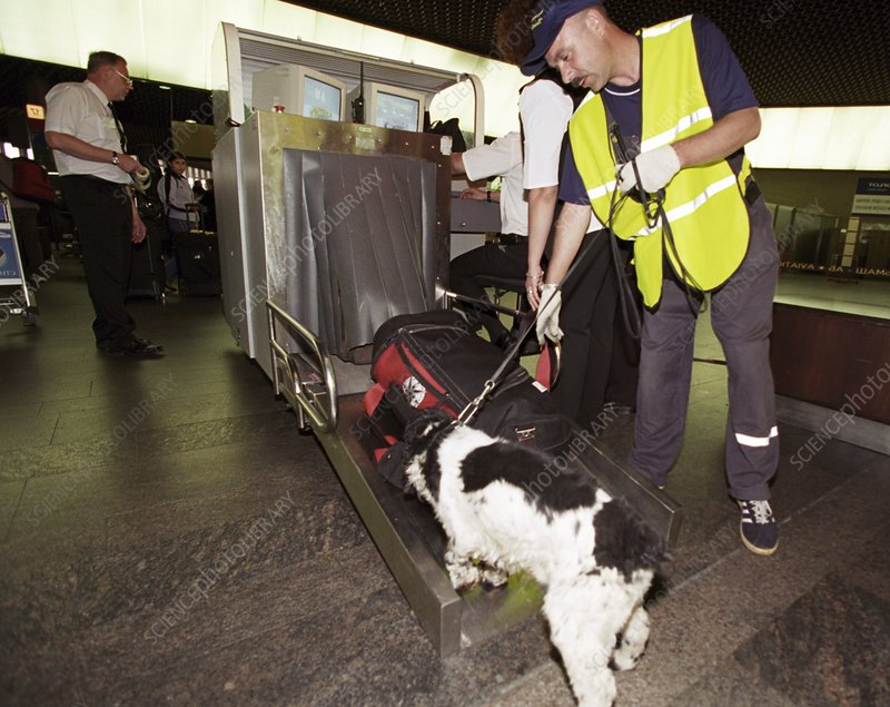 Airport security, explosives detection