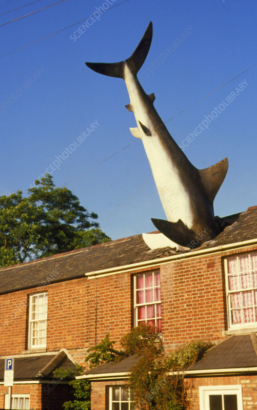 Giant shark protruding from the roof of a house!