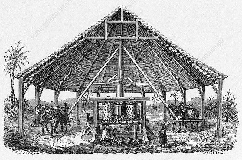 Sugar cane plantation mill, 19th century