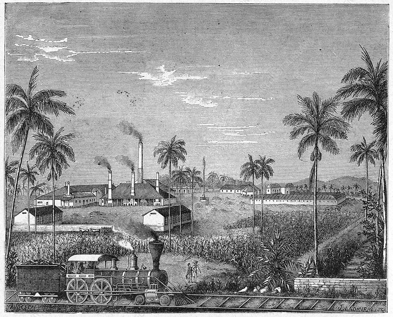 Sugar cane plantation, Cuba, 19th century