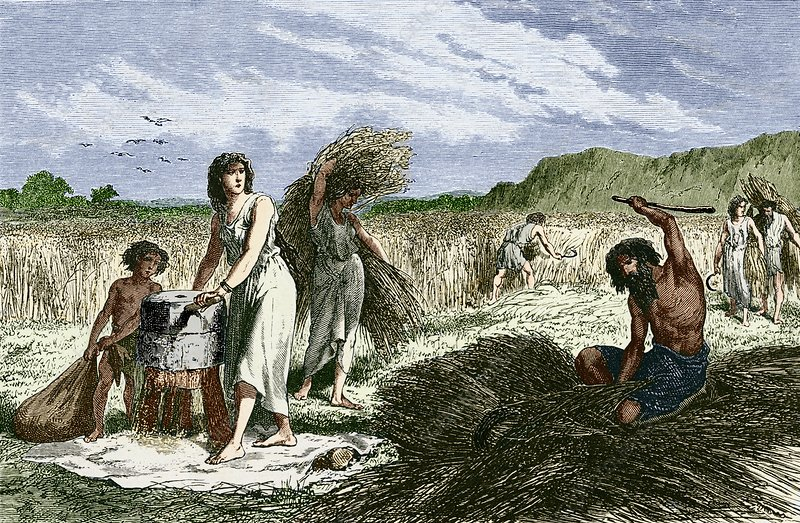 Early humans harvesting crops