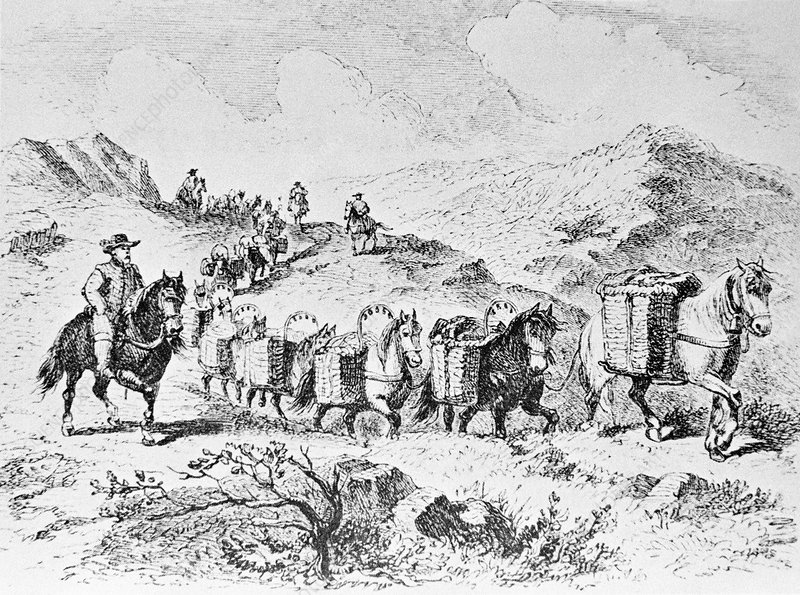 Packhorses carrying goods