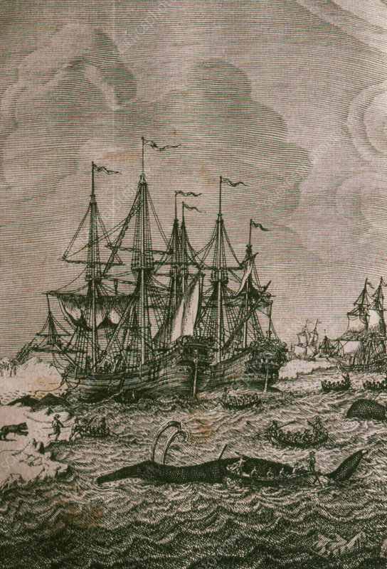 Illustration of whaling ships in Arctic, 1720.