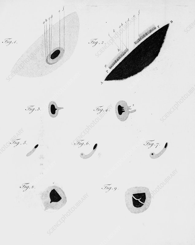 Sunspot observations, by Herschel, 1801
