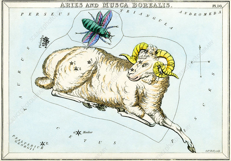Aries and Musca Borealis constellations