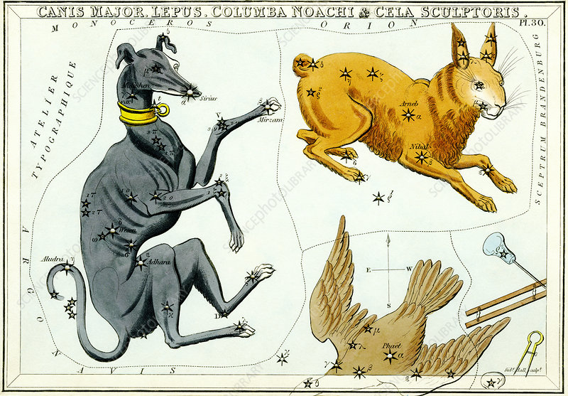 Canis Major and Lepus constellations