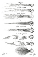 Types of comets, 1668