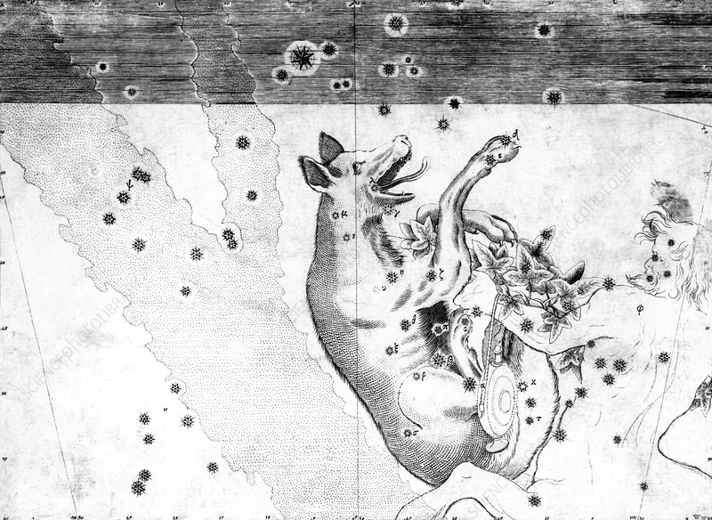 Lupus constellation, 1603