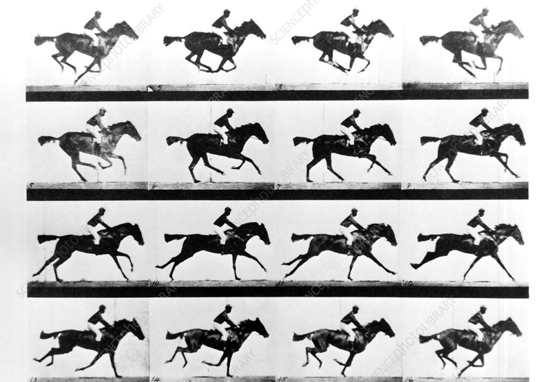 Muybridge's photo of a cantering horse (1884)