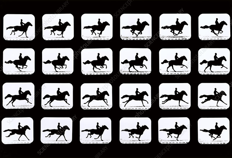 High-speed sequence of silhouetted horse and rider