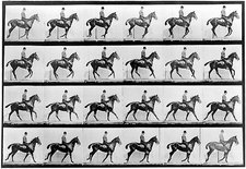 High-speed sequence of a cantering horse and rider