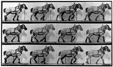 High-speed sequence of a walking horse