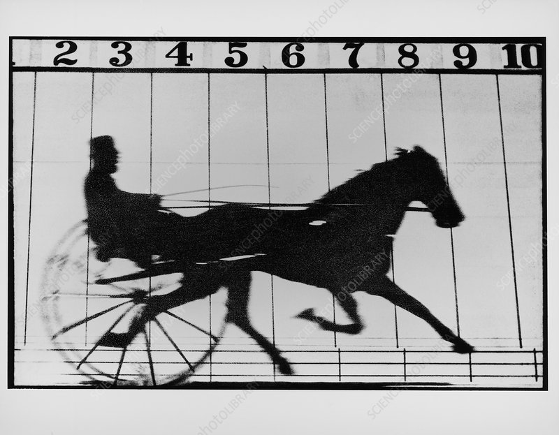 High-speed photo of a trotting horse pulling cart