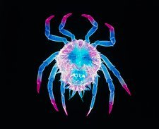 Spider crab X-ray