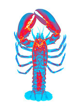 Lobster, X-ray