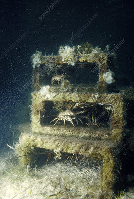Artificial Reef for Lobsters