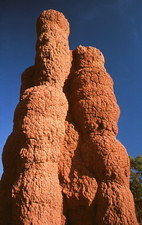 Termite mound built by worker termites