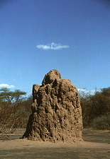 A termite mound located in the Rift Valley, Africa