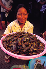 Cambodian woman with bowl of cooked cicadas