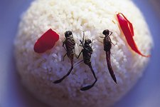 De-winged fried edible dragonflies on rice