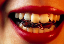Rice field grasshopper between woman's teeth