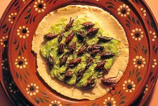 Roasted grasshoppers and avocado on tortilla