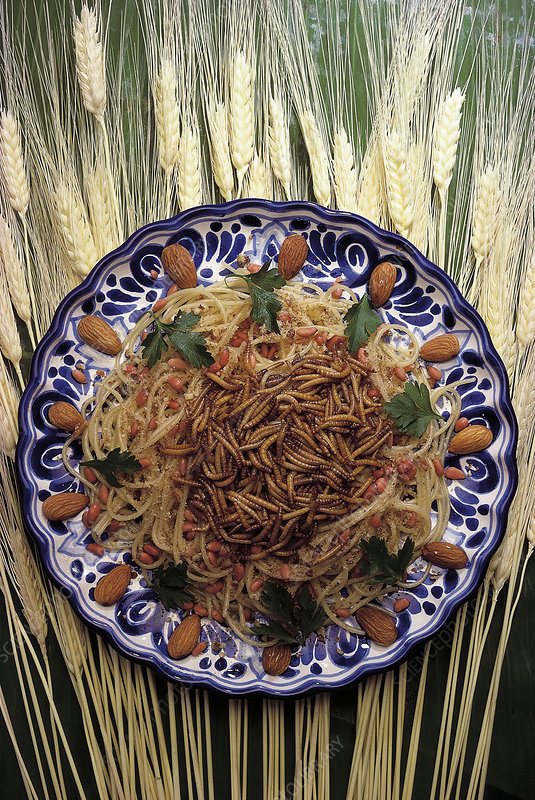 Spaghetti made with edible mealworms, Tenebrio sp.