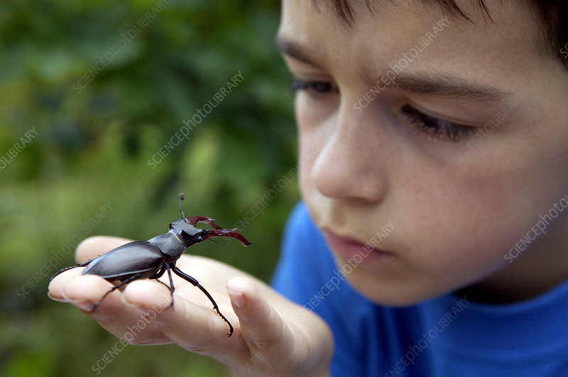 Boy with stag beetle