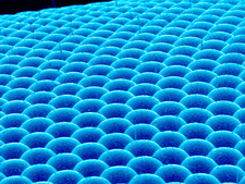 Fly compound eye, SEM