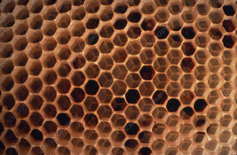 Chambers in a naturally formed honeycomb