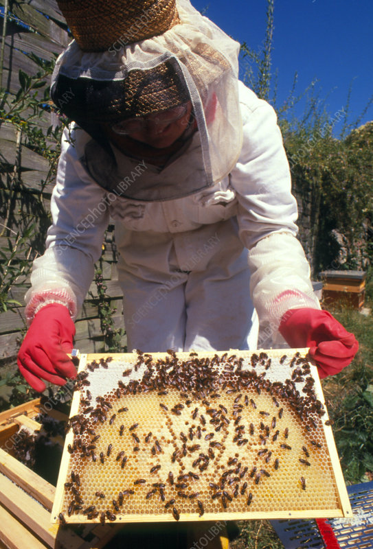 Beekeeper on protective clothing