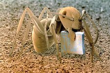 SEM of ant holding a microchip