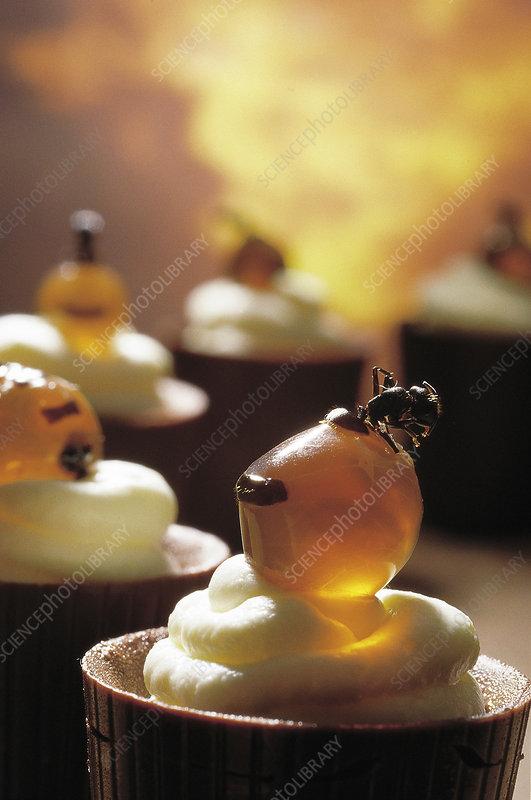 Honey ants (Melophorus sp.) on chocolate cups