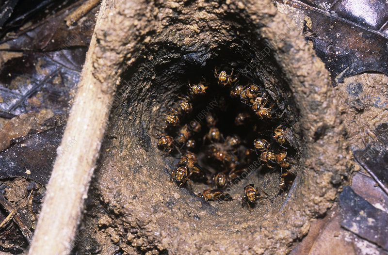 Bees' nest on the forest floor